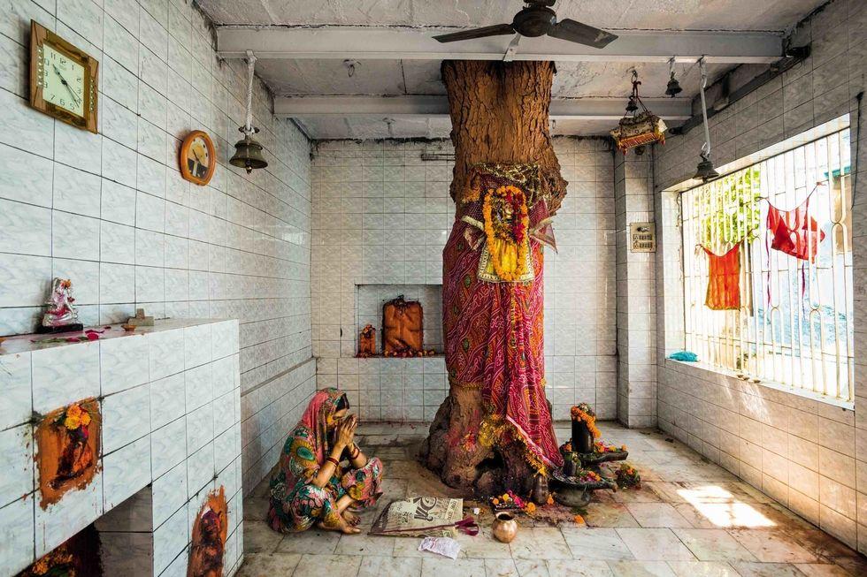 Hindistan'daki Shitala'nın Ağacı