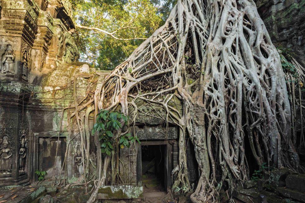 Tomb Raider Ağaçları - Kamboçya