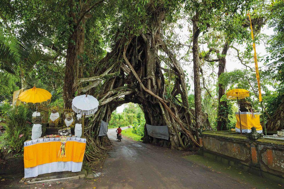 Bunut Bolong - Batı Bali, Endonezya
