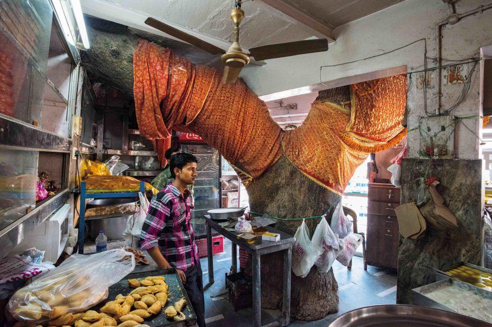 Tatlıcı Dükkanı Ağacı Hindistan