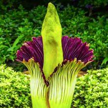 Dünyadaki En Tehlikeli Bitkiler